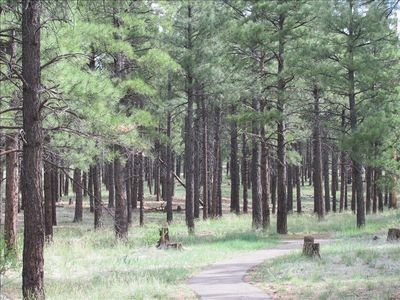 A shady walk among the pines of McPherson Park, one minute from the front door!