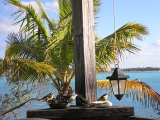 Lubbers Quarters Cay cottage photo - Feathered Friends gather daily at the jelly bowl