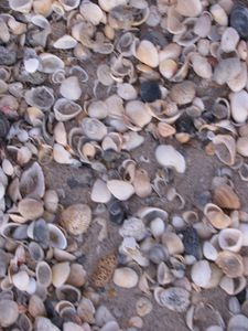Take time to go shelling!!.