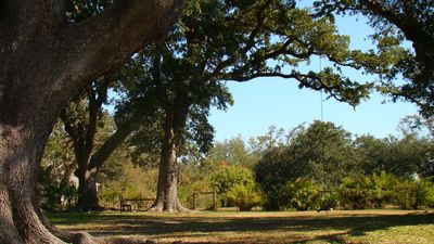 Oak trees provide lush canopy in backyard