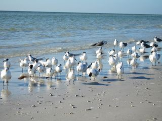 Sanibel Island condo photo - Nature at its finest on the Island