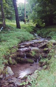 Enjoy the sounds and sight of the creek running along the side of the cabin