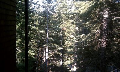 Forest View from Living Room