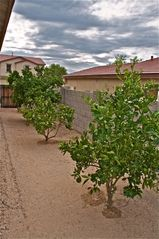 Tucson house photo - At the Right Time of Year, Citrus is ripe for picking.