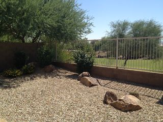 Goodyear house photo - Nicely landscaped backyard with an open view, no home behind it.