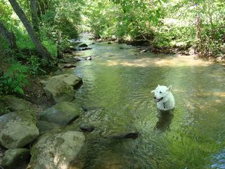 Murphy cabin photo - Have a Dog-Gone Good Time as You Cool Off in the Water