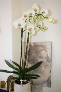 Orchids in the lounge room