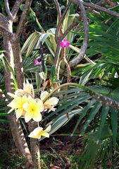Northside villa photo - Frangipani and orchids (and many other flowers and fruits) on villa grounds.