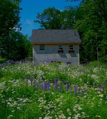 Camden cottage photo - Wildflowers in late June in front of the cottage.