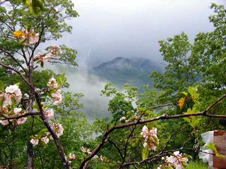 Clayton cabin photo - Foggy mountain summer morn thru mountain laurels