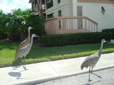 Exotic Florida Birds seen at PGA