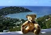 VRBO Bear loved the view of Great Cruz Bay