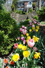 East Hampton house photo - Spring flowers in bloom