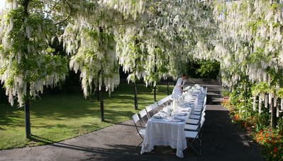 Right now the wisteria are in full bloom. An amazing place for your next dinner party!