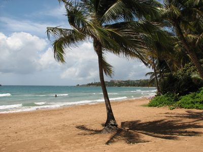 Visit This Palm Tree - The beach in front of unit