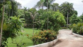 Nassau & Paradise Island cottage photo - Lush garden view up the private drive