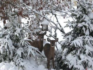 deers in the backyard - Albrightsville house vacation rental photo
