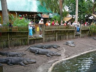 St. Augustine Beach house photo - Alligator Farm in St Augustine. Zipline if you dare!