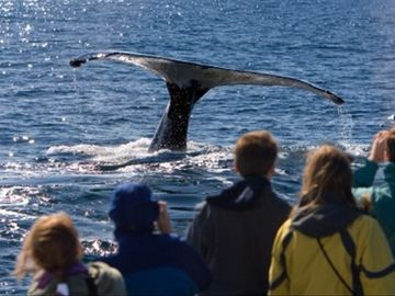 Dana Point is known for great Whale Watching!