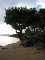 Anini Beach house photo - Anini Beach walk