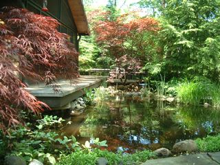 Michigan City house photo - Deck overhangs koi pond with water lilies