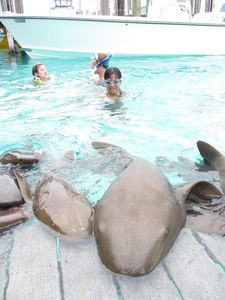 Nurse Sharks in Exuma Cays tour