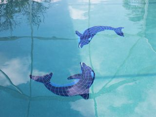 Punta Gorda house photo - Dolphins in heated pool.