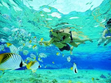 Snorkeling is great in the crystal clear ocean.