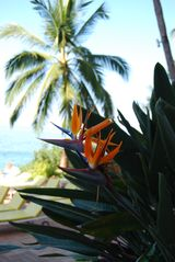Puerto Vallarta condo photo - Bird of Paradise