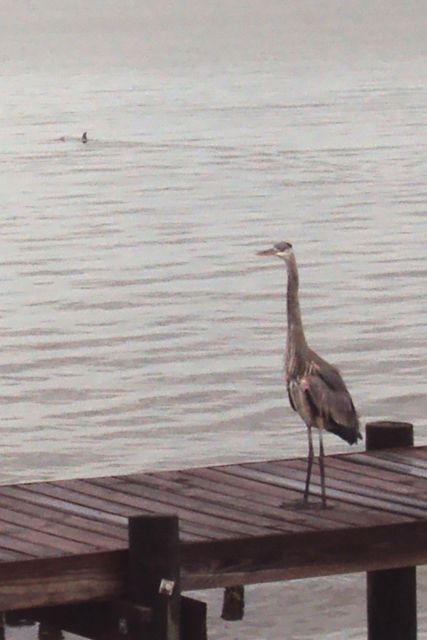 "or watch dolphins with Heron ""Balzac"""