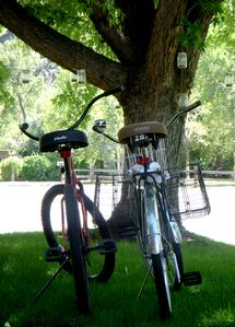 Bicycles For Cruising Around Town - Available to Rent at Ajax Bike - 2 min away