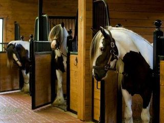 Toronto estate photo - Gypsy Vanner horse breed