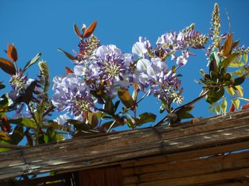 April Flowers on Pergola