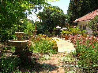 Carmel house photo - Backyard