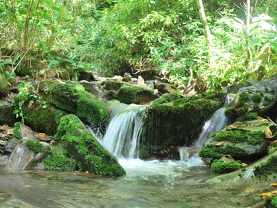 Explore the beautiful Gatlinburg National Forrest