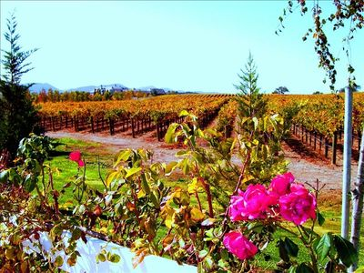 Vineyards in Fall Colors