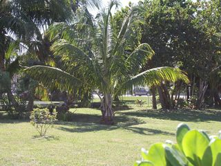 Tropical garden - Spanish Wells cottage vacation rental photo
