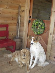 Well mannered dogs are welcome to join you!  Lucy and Bear wouldn't miss it!