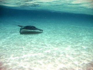 Grand Cayman condo photo - StingRay City