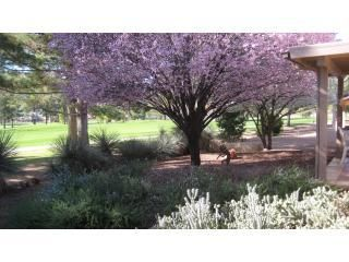 Sedona house photo - Seasonal Plum Trees in back