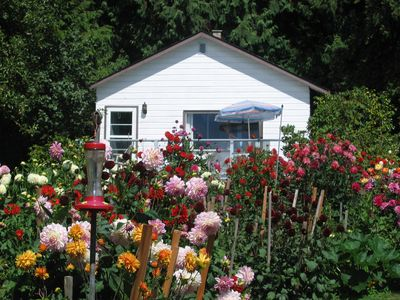 Garden Cottage With 100 dahlia plants in bloom in front of cottage in summer