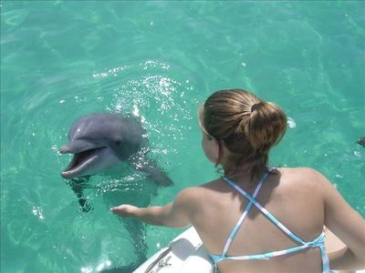 Swim with the Dolphins Off Shell Island