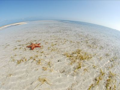 Boat to this nearby sandbar filled with starfish