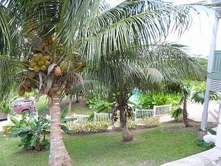 Nassau & Paradise Island cottage photo - Coconut Trees on site