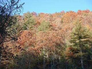 Hot Springs house photo - Fall Majesty, view from front deck