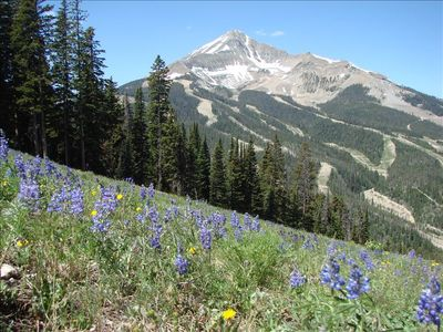 Summer View of Lone Peak and Wildflowers