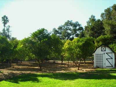 Ojai house rental - Fruit orchard and children's play house