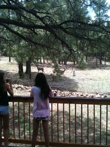 Flagstaff cabin rental - Check out the deer from the back deck