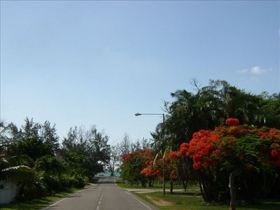 Poinciana in Bloom along Prince Charles Dr./Yamacraw Beach in background