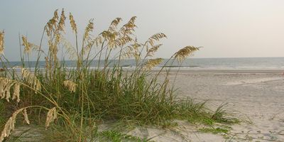 Beach grasses in front of the resort.